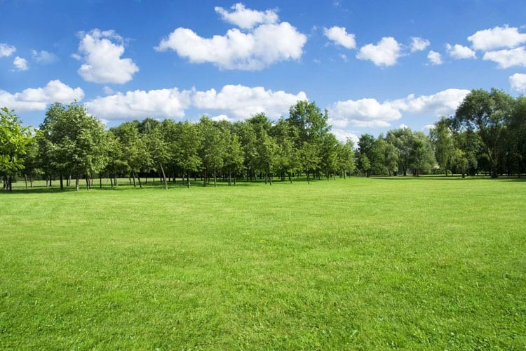 green field with rows of trees